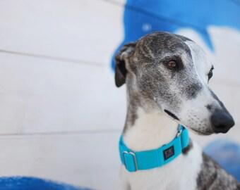 Blue Lagoon été martingale collier de chien - bleu élégant durable léger collier de chien