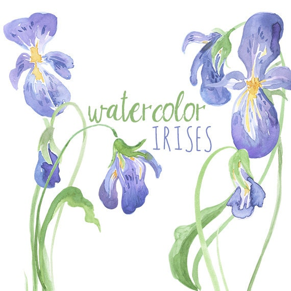 watercolor irises clip art iris artwork watercolor iris rh etsy com iris clip art images iris clip art black and white