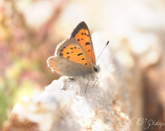 Butterfly on Quartz Stone photography print - light brown orange tan rust color nature nursery decoration rustic animal lover 5x7 8x12 10x10