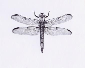 Dragonfly_two_- Original Pencil Drawing, wildlife art