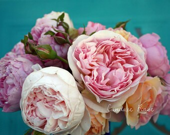 Pink English Roses on Turquoise - Fine Art 8 x 10 Photography Print