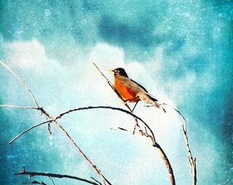 Spring Red Robin On Bare Branch -Fine Art Nature Print -Bird & Blue Sky -Cyan White Orange -Home Decor Wall Art Fine Art Print