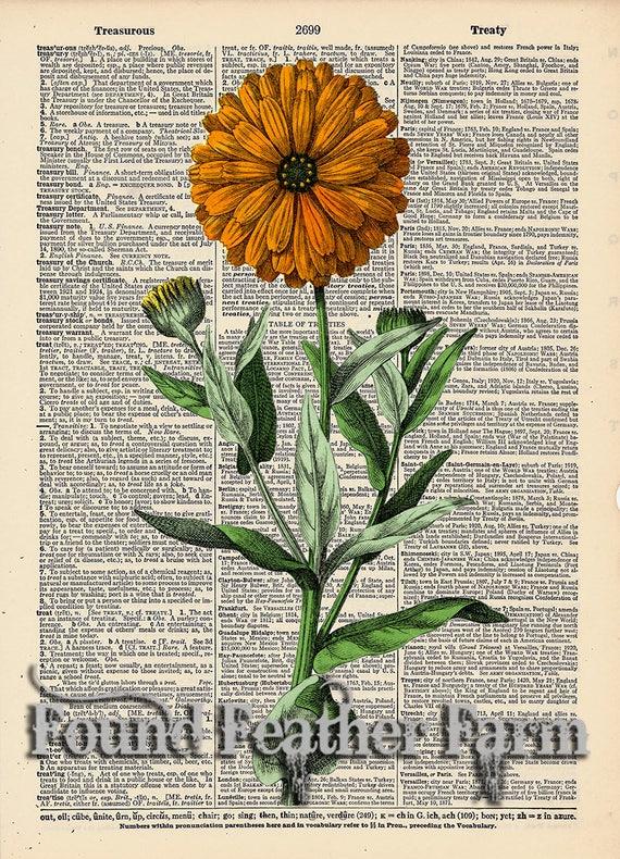 "Vintage Antique Dictionary Page with Antique Print ""Orange Flower"""