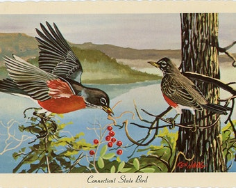 Connecticut State Bird - Robins Vintage Postcard Signed Artist Ken Haag (unused)