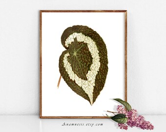PRETTY LEAF 3 - digital image download - printable antique plant illustration retooled by Anamnesis - image transfer - totes, pillows