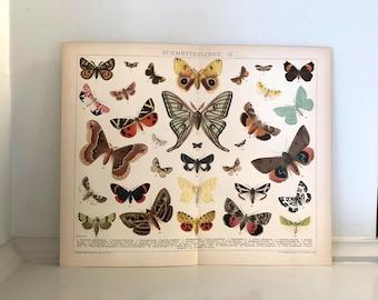 c. 1903 BUTTERFLIES PRINT - original antique insect print - butterfly print - moths - the Lepidoptera print no. 2