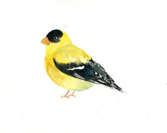 GOLDFINCH Original watercolor painting 10X8inch