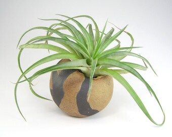 Tan Pinch Pot Vase, Small Black and Tan Round Vase, Air Plant Pod With Yellow, Pinch Pot Vase, Small Ceramic Pinch Pod, Weed Pot 10-15-14