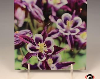 Purple Wildflowers on Brushed Aluminum