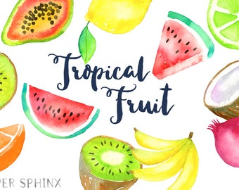 Watercolor Tropical Fruit Clipart   Fruit Clip Art - Pineapple, Bananas, Kiwi, Coconut, Pomegranate, Papaya, Citrus - Instant Download PNGs