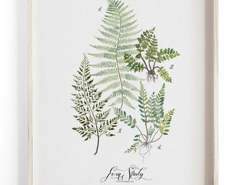 Fern Study Vol.1 - Botanical Scientific illustration. Beautifully textured cotton canvas art print.  Large scale art