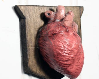 Valentine Heart - Small Mounted Anatomical Human Heart