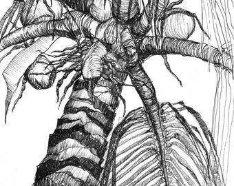 Art Pen and Ink Drawing Tropical Palm Tree  with Coconuts  Print
