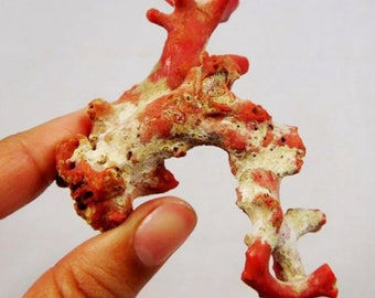 Awesome Designer 173.00cts 100% Natural Rare Red Coral 83x35mm Stick Specimen AD558