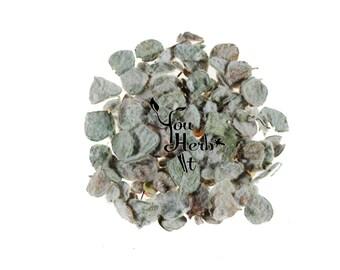 Dittany of Crete Dried Leaves - Origanum Dictamnus