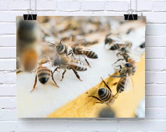 Honey Bees Bee Insect Bright Nature Outdoor Photography - Art Print Poster wall Ar Decor High Quality Giclee