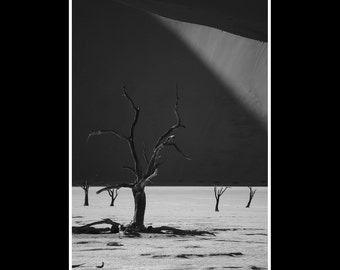 Tree print Africa dune black and white nature photography fine art photo 8x12