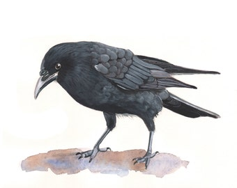 Crow painting -Print of Watercolor Painting Size A4 print, bird art, wall art, home decor