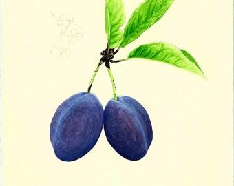 44 Botanical Plum Card