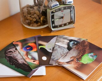 """Pack of 5 blank greeting cards - """"Feathered Friends"""" Australian Birds:Emu, Fig Parrot, Barn Owl, Supher Crested Cockatoo, Rainbow Lorikeet"""