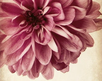 Vintage Style Flower Photography Romantic Feminine Home Decor 10x8 print Nostalgia...