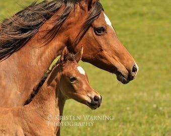 Spring Equines, Horses, Arabian Pictures, Foals, Arabians, Horse Photos, Pictures of Horses, Equine Art