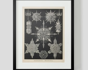 Vintage Ocean Life Haeckel Print Plate 41