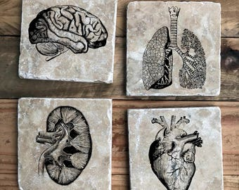 Anatomy Coasters, Vintage Medical, Vintage Anatomy, Tumbled Marble, Heart, Brain, Lungs, Kidney, Med Student, Medicine, Coaster set