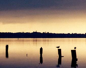 Golden Humboldt Bay, California