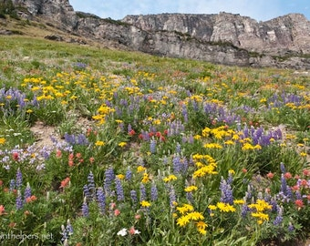 Montana Wildflower Landscape Lupins, daisies, Indian Paint Brush, Rocky Mountains, Alpine Flowers Photograph or Greeting card