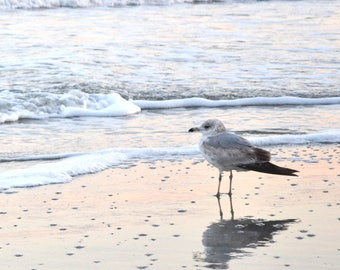 Lone seagull on the beach- vertical printed photograph