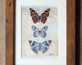 Butterfly Picture, Butterfly Art Print , Butterfly Trio - Framed in a beautiful Oak effect frame a Chrystal Archive print of the original.