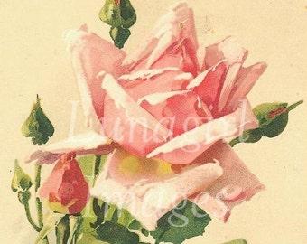 Victorian FLOWERS, 900 images digital DOWNLOAD, vintage images Victorian roses floral art cards botanical prints FRUIT trees pansies violets