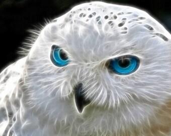 Blue Eyed Owl Cross Stitch Pattern PDF