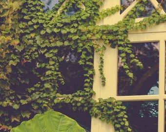 Window Photograph - Foliage - Garden Print - Green Art - Fine Art Photography - Home Decor - Architecture Photograph - Wall Art - Ohio