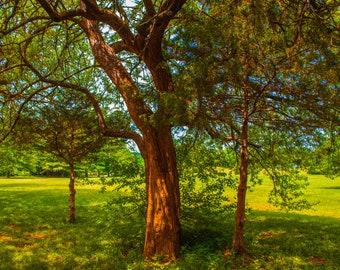 Tree Photo on Square Canvas