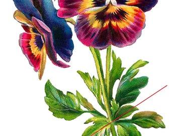 Temporary tattoo - Pansy flower