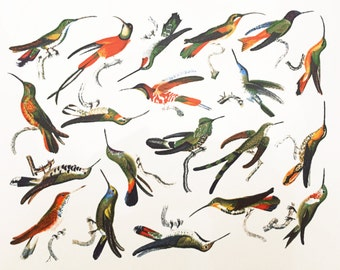Colorful Hummingbirds - Glass Fusing Decal, Ceramic Decal, Enamel Decal