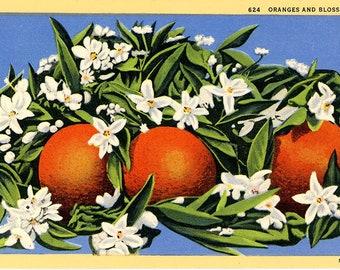 Oranges and Blossoms Vintage Botanical Postcard (unused)