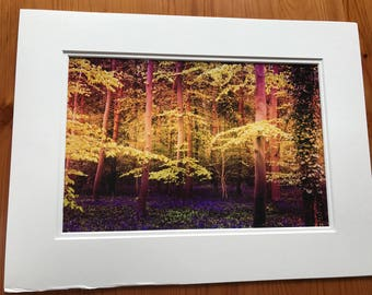 Enchanted wood 12x8 print in a A4 mounted frame
