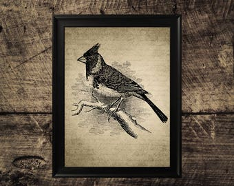 Vintage bird print, bird wall decor, room decor, vintage bird wall art,bird printable art