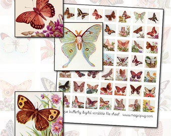 Antique Butterfly & Moth Digital Collage Sheet 1x1 inchies 25.4mm 25mm square