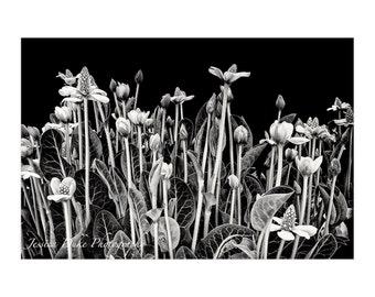 Flower Art, Flowers Black and White, Leaf Photography, Floral Print Wall Art, Floral Photography, Nature Photo, Matted Print, Ready to Frame