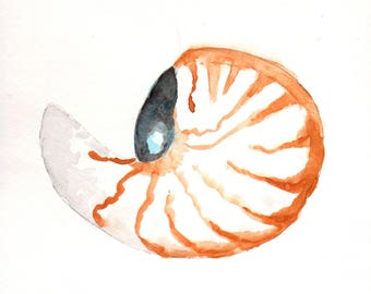 Shell, Nautilus