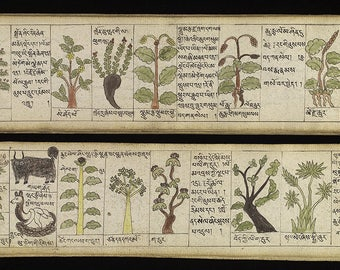 Substances for Teaching of Four (Medical) Tantras - Tibetan Medical Literature - Ink 18th century - Herb Chart - Tibetan Wall Art