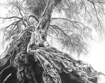 Olive Monumental Tree