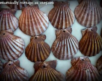 Seashells, Handmade, Drilled, Craft Supplies, Summer, Beach, Ocean, Jewelry