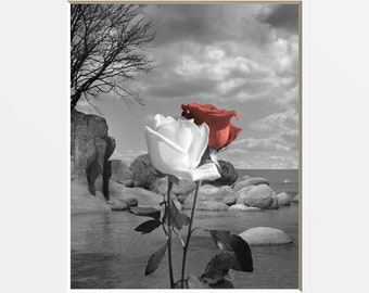 Black White Coral Wall Art, Coral Rose Flower, Pop OF Coral, Bath, Bedroom Coral Gray Home Decor Matted Picture