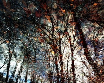 Forest Full of Color - Nature Fine Art Photography