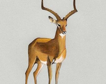 Money antelope (very lucky) / Original  Illustration/ 16 x 21 cm